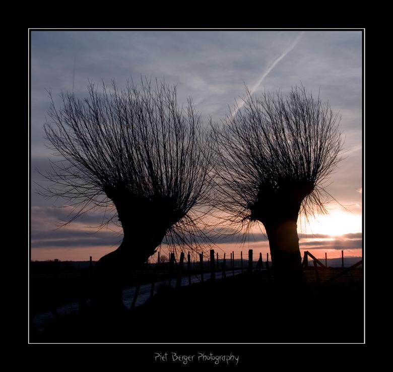 Moeilijke tijd - Toen ik deze twee bomen zag dacht ik direct aan mensen die elkaar door moeilijke tijden heen helpen door steun bij elkaar te zoeken.<