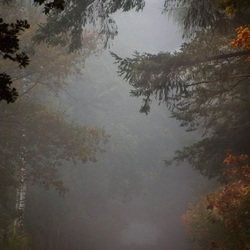 Mystieke ochtend in het bos