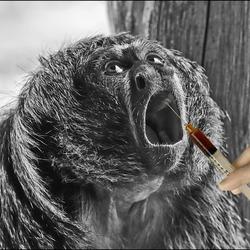 een aap bij de tandarts???