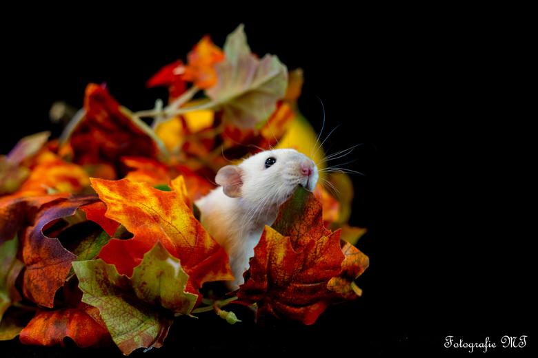 herfst portret -