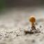 kleine paddenstoel
