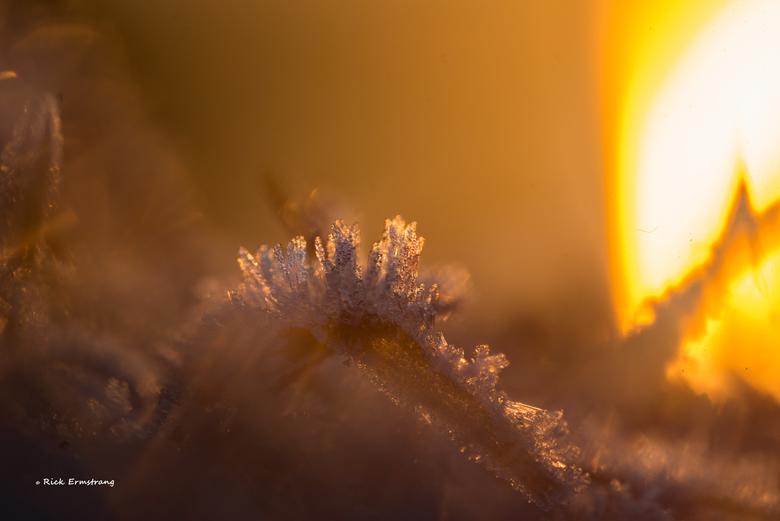 Frozen - Biesbosch zondagochtend  zonsopkomst en vorst..
