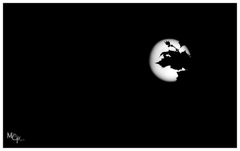 Spooky Moon - Even wat 'spelen' met een volle maan...