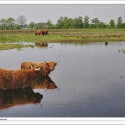 Hooglanders Fochtelooërveen