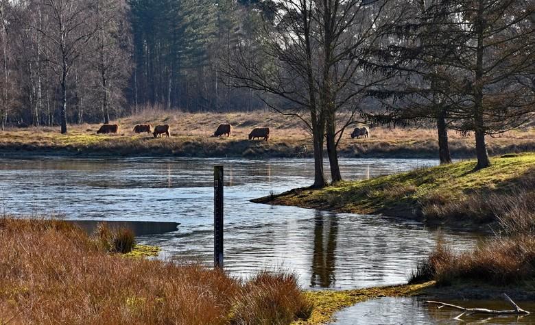 Winters bos - Een plaatje van gisteren in Boswachterij Dorst.