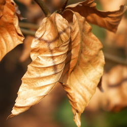 herfstbladeren in winter