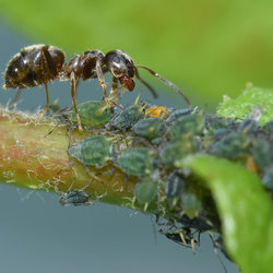 Paradijs voor een mier.