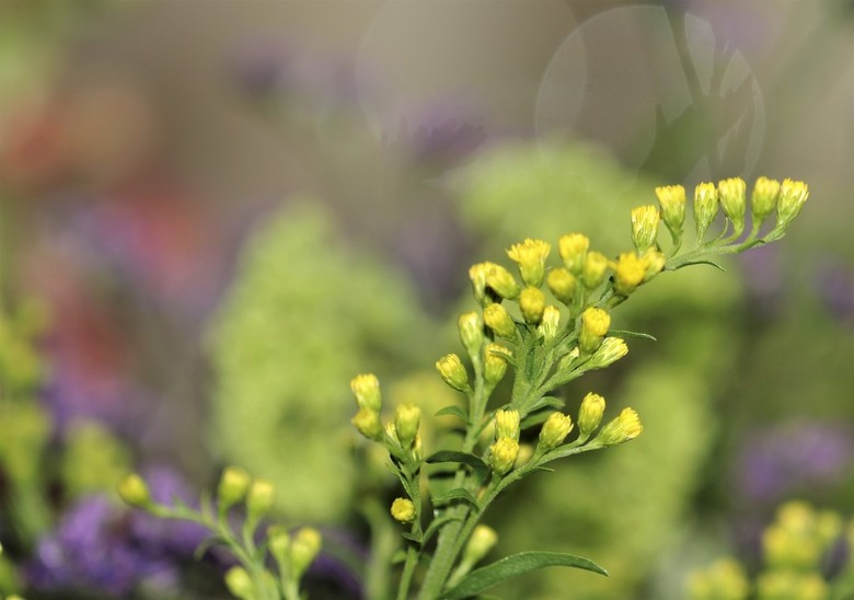 Boeketje - Uit een bosje bloemetjes