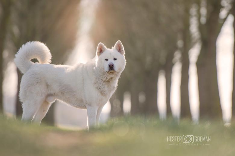 Genieten... - Wat een uitdaging, deze prachtige hond die geen commando's kent. Gelukkig had hij af en toe een momentje dat hij even stil wilde st
