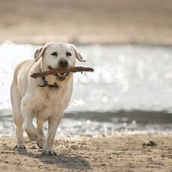Hond bij het water