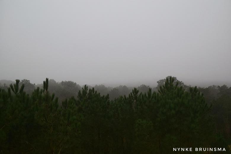 Mistig bos - Mistig bos, genomen vanaf het uitkijkpunt op het Vuurboetsduin op Vlieland