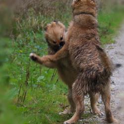 Mag ik deze dans van u?