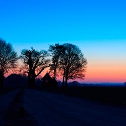 Kroezeboom bij ochtendgloren