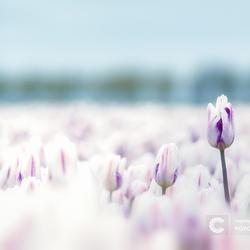 Beetje zwijmeren richting het voorjaar