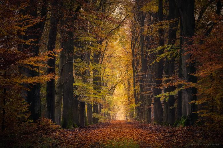 Rust - Even terug naar deze herfstochtend op de Veluwe.<br /> <br /> Exif: 0.8s, 75mm, F8, ISO 100