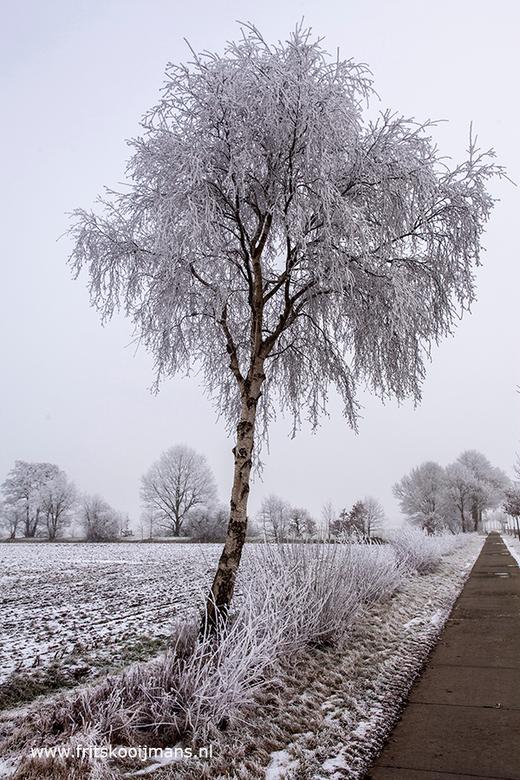 Besneeuwde boom bij Veenhuizen - 20170117 5132 Besneeuwde boom bij Veenhuizen