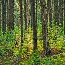 Door de bomen.....