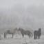 Horses in a frozen landscape