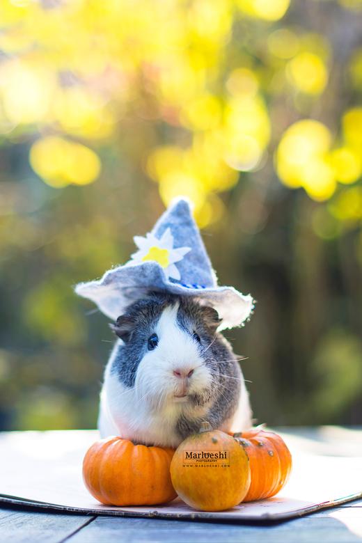 Pumpkin Queen - Geef toe, dit is een van de schattigste dingen die je vandaag hebt gezien.