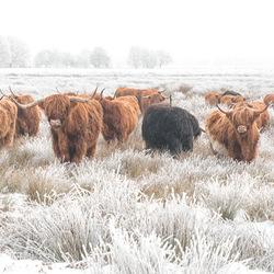 Schotse winterjassen