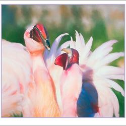 de flamingo's................