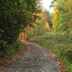 Ardennen in herfstkleur