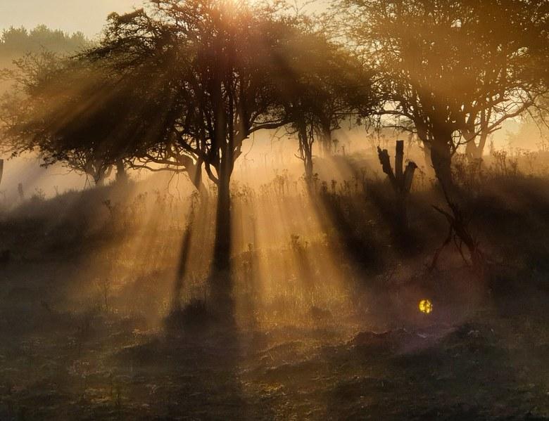 AWD mysterieus landschap  - Een mysterieus mistig landschap waarbij de eerste zonnestralen voorzichtig door de bomen heen komen.  Een totaal ander pla