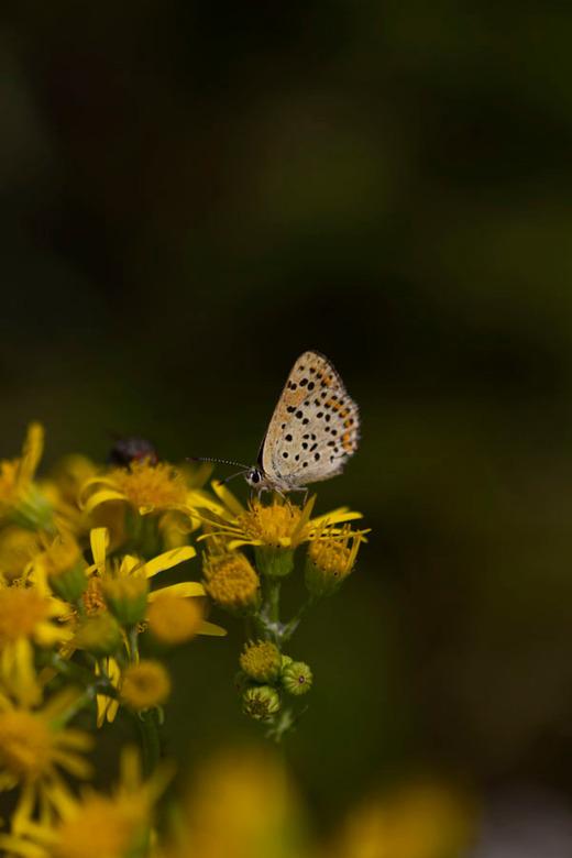 Butterflies Secret...