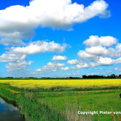 Koolzaadveld bij Uithuizen (Noord Groningen)