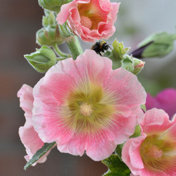 Soft, Pink and Beautiful