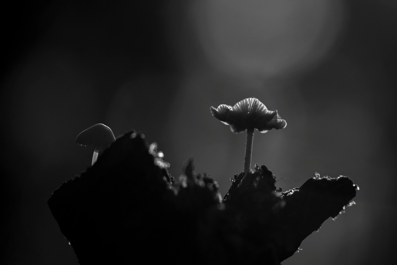 Al het licht komt van boven: Paddo's - Mooie dag in de bossen van Dorst gehad. Paddo&#039;s in tegenlicht.<br /> <br /> <br /> Wederom bedankt voor