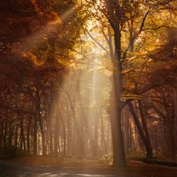 Spotlight autumn