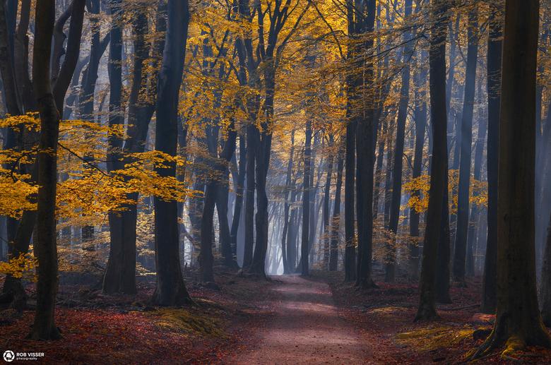 Colourful playground - Herfst in het mistige magische Speulderbos.