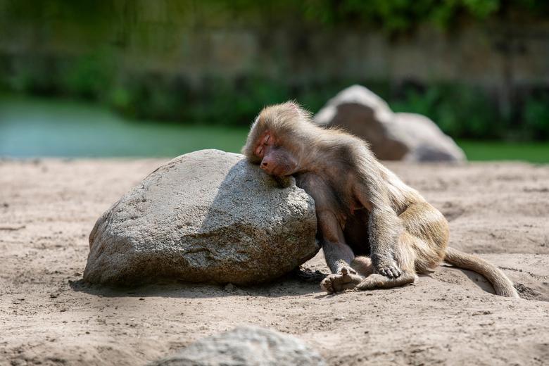 Just a little nap... - dit vrouwtje was even toe aan een dutje