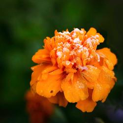 Vrolijk oranje