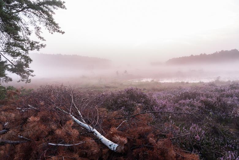 nevelig heidelandschap - Het was erg vroeg opstaan die ochtend in augustus, maar de inspanning werd beloond met een prachtig nevelig heidelandschap en