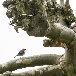 Kleine vogel, grote boom