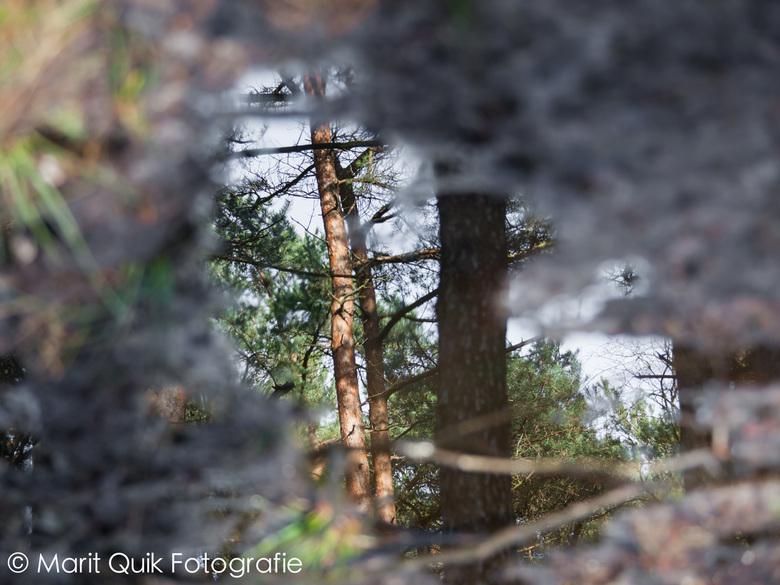 Doorkijkje - Altijd leuk, weerspiegelingen