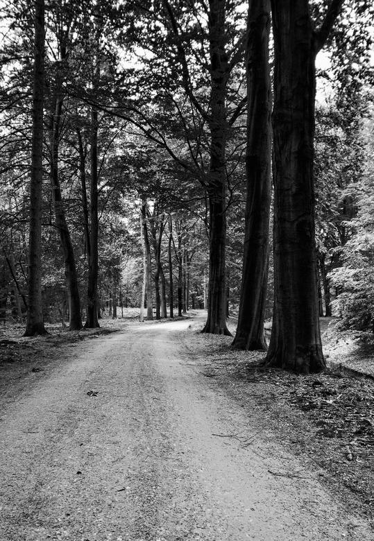 Bos - Het dichtbegroeide bos nabij de watervallen in Loenen.<br /> Het licht valt mooi tussen de bomen door.