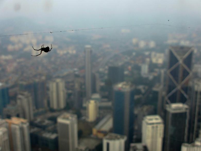 The spider - Hier zit ik boven in de Petrons Towers in Kuala Lumpur. Deze spin vind dit blijkbaar een goede locatie om zijn web te maken...