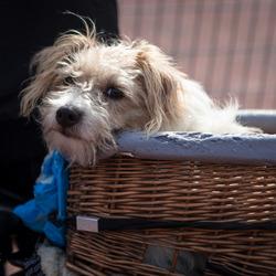 Ook een hond heeft weekend !