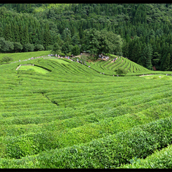 China '07