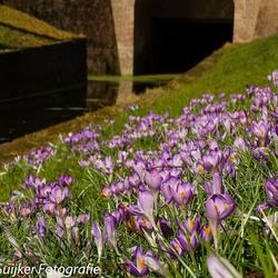 De lente kondigt zich aan, ook in NIeuwpoort