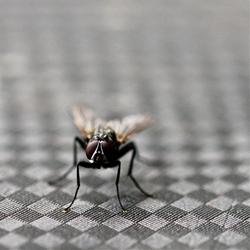 Fly Checker