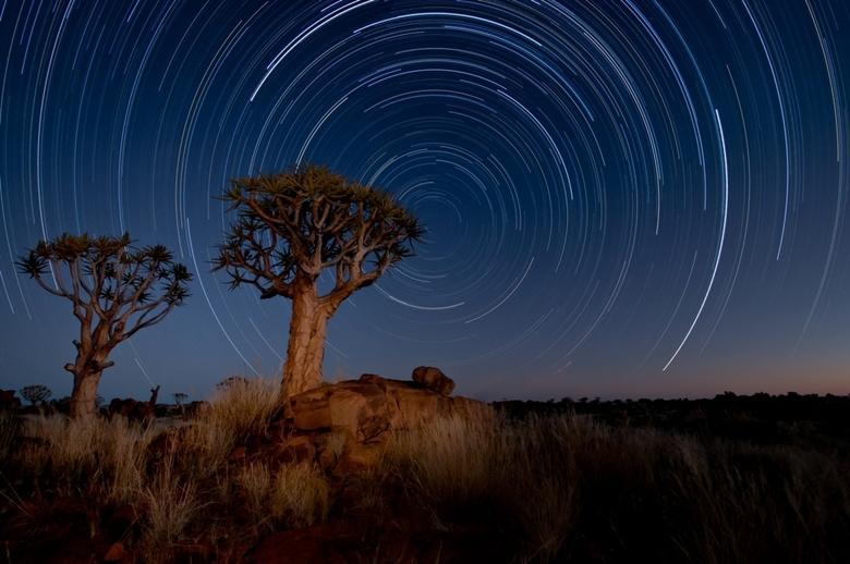 Sterrenspoor - Sterrenspoor bestaande uit 48 opnames van 5 minuten.  Genomen in Namibie, Keetmanshoop met op de voorgrond een kokerboom.