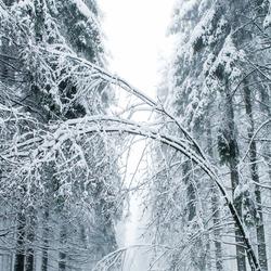 Winter in Baraque la Fraituse