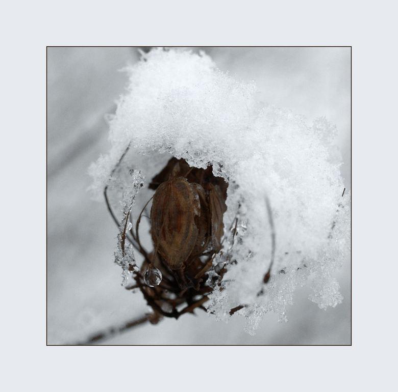 Een druppel water - Een bevroren druppel