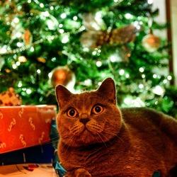 Warmte@Kerst