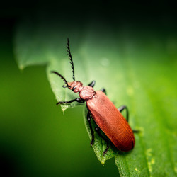 Insect DL1_1426