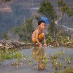 Jongen in het rijstveld